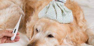 Prenditi cura di Fido: aumenta l'influenza canina