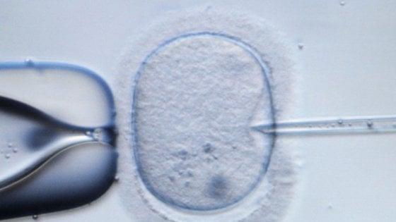 Gli scienziati creano le prime uova umane sviluppate dal laboratorio